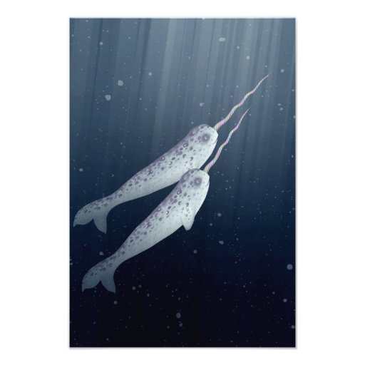Cute Narwhals Swimming Together Underwater Photo