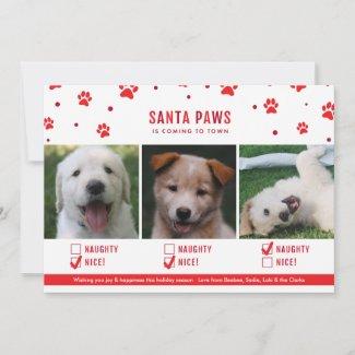 Cute Naughty or Nice Three Dog Christmas Photo Holiday Card