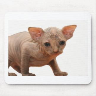 Cute newborn sphynx kitten mouse pad