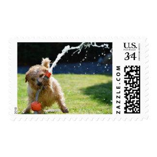 Cute Norfolk Terrier Playful Garden Dog Stamp