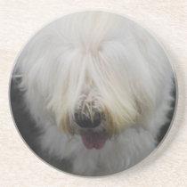 Cute Old English Sheepdog Coaster