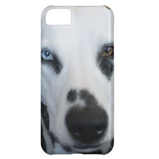 Cute One Blue Eye Dalmatian Dog Cover For iPhone 5C