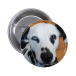 Cute One Blue Eye Dalmatian Dog Pinback Buttons
