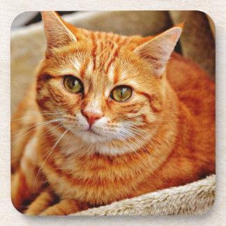 Cute Orange Cat Coaster