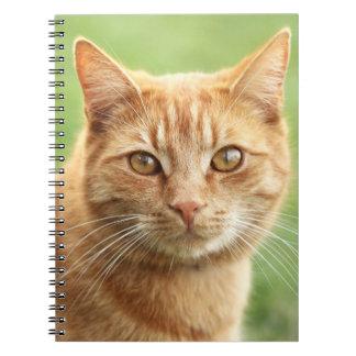Cute orange cat portrait notebook
