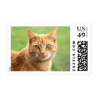 Cute orange cat portrait postage