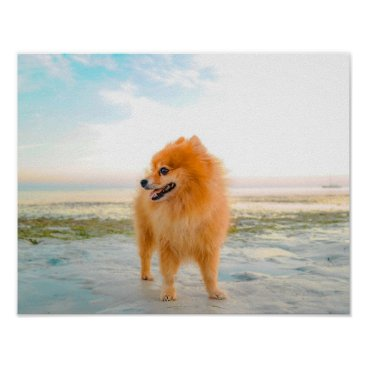 Beach Themed Cute Orange Pomeranian in Sand at the Beach Poster