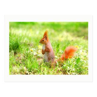 Cute Orange Squirrel Nature Wildlife Photo Postcard