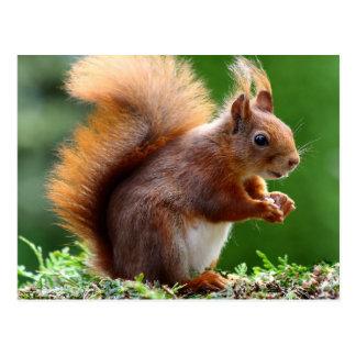 Cute orange squirrel postcard