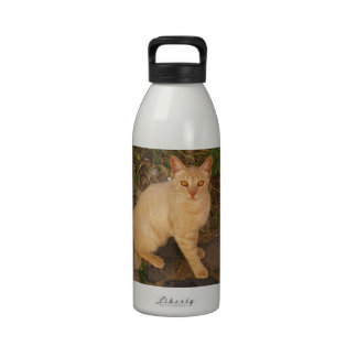 Cute Orange Tabby Kitty Cat picture Water Bottle