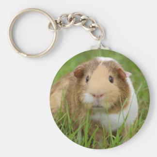Cute orange-white guinea pig in grass basic round button keychain