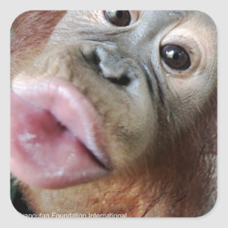 Cute Orangutan Baby Kiss Sticker
