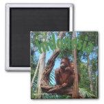 Cute Orangutan in Rainforest 2 Inch Square Magnet