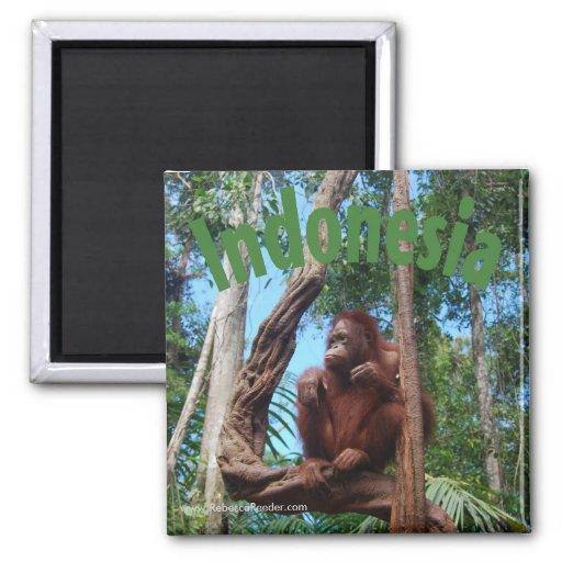 Cute Orangutan in Rainforest Fridge Magnets