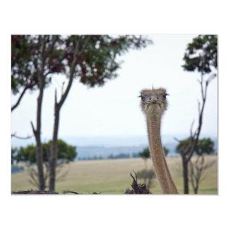 Cute Ostrich Card