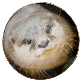 Cute Otter, Animal Portrait, Nature Photography Chocolate Covered Oreo