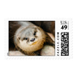 Cute Otter, Animal Portrait, Nature Photography Postage Stamps