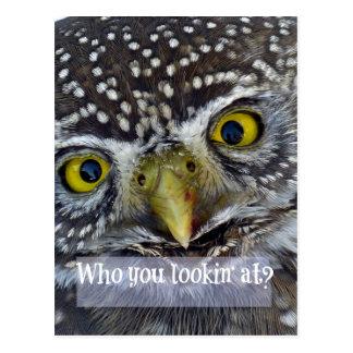 Cute Owl Face Postcard