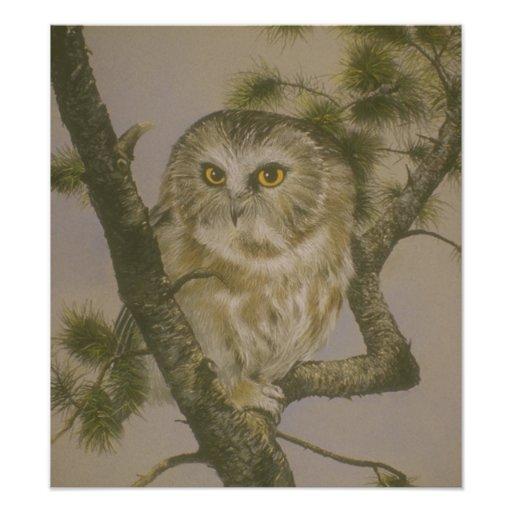 Cute Owl in Tree Art Poster Photo Print