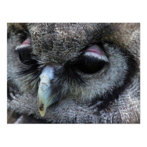 Cute Owl Post Cards