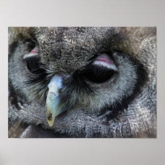 Cute Owl Poster