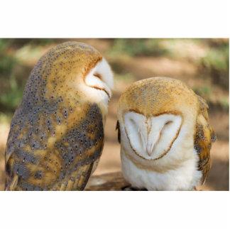 cute owl statuette