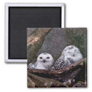 Cute Owls 2 Inch Square Magnet