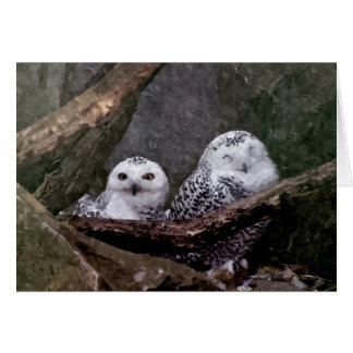 Cute Owls Greeting Card
