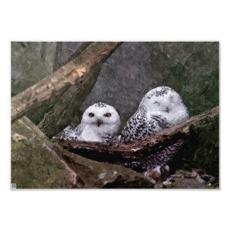 Cute Owls Photo Print