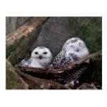 Cute Owls Postcard