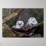 Cute Owls Print