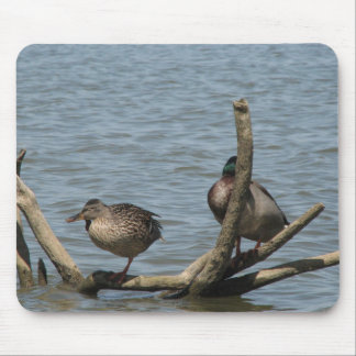 Cute Pair On Ducks Sitting On The Floating Branch Mouse Pad