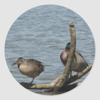 Cute Pair On Ducks Sitting On The Floating Branch Stickers