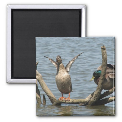 Cute Pair On Ducks Sitting With Open Wings On The Fridge Magnet
