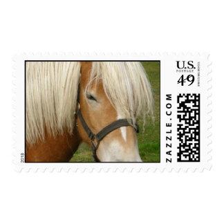 Cute Palomino Pony Postage Stamp
