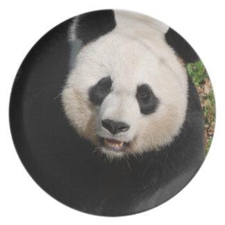 Cute Panda Bear Plate