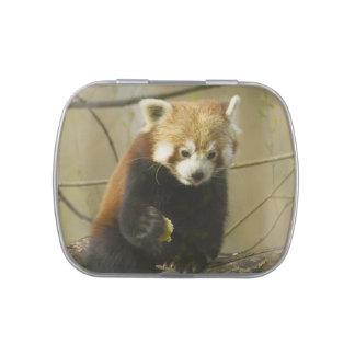 Cute Panda Bears Peace Love Party Destiny Digital Candy Tin
