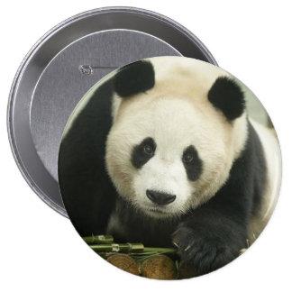 """""""Cute Panda"""" Pinback Button"""
