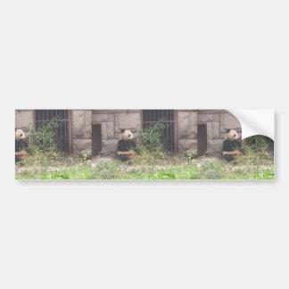 Cute Panda Eating Bamboos In His Cage At Zoo. Car Bumper Sticker