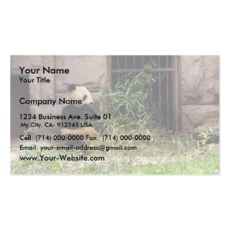 Cute Panda Eating Bamboos In His Cage At Zoo. Double-Sided Standard Business Cards (Pack Of 100)