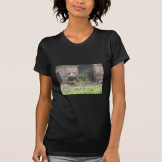 Cute Panda Eating Bamboos In His Cage At Zoo. T Shirt