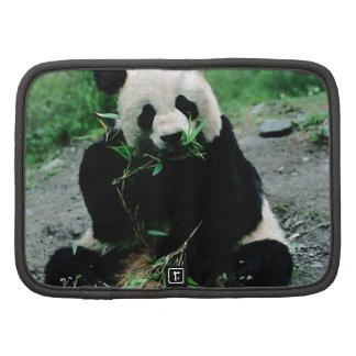 Cute Panda Enjoying his meal Organizers