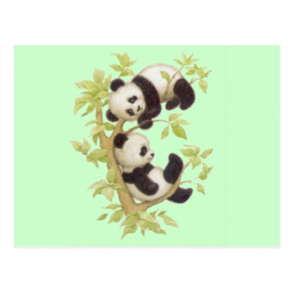 Cute Pandas Postcard