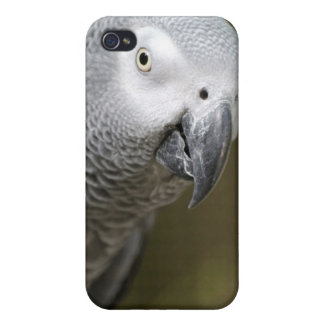 cute parrot iPhone 4/4S cover