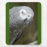 cute parrot mouse pad