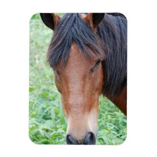 Cute Paso Fino Horse Premium Magnet Rectangle Magnets