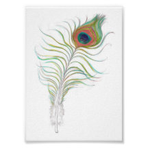 Cute peacock feather watercolor painting print