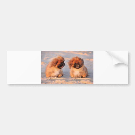Cute Pekingese Dogs Bumper Sticker