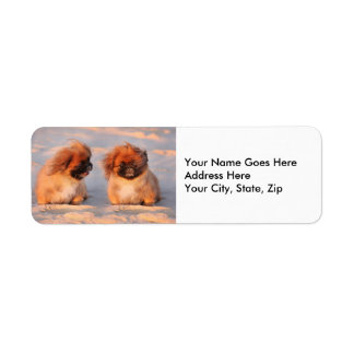 Cute Pekingese Dogs Return Address Label