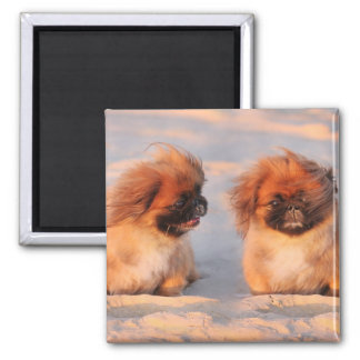 Cute Pekingese Dogs Fridge Magnet